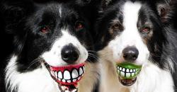 7 kreatív ajándék ötlet kutyánknak